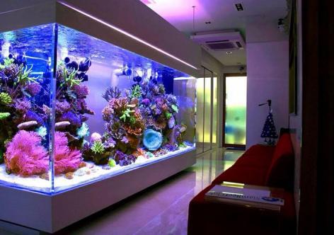 air akuarium harus rutin diganti